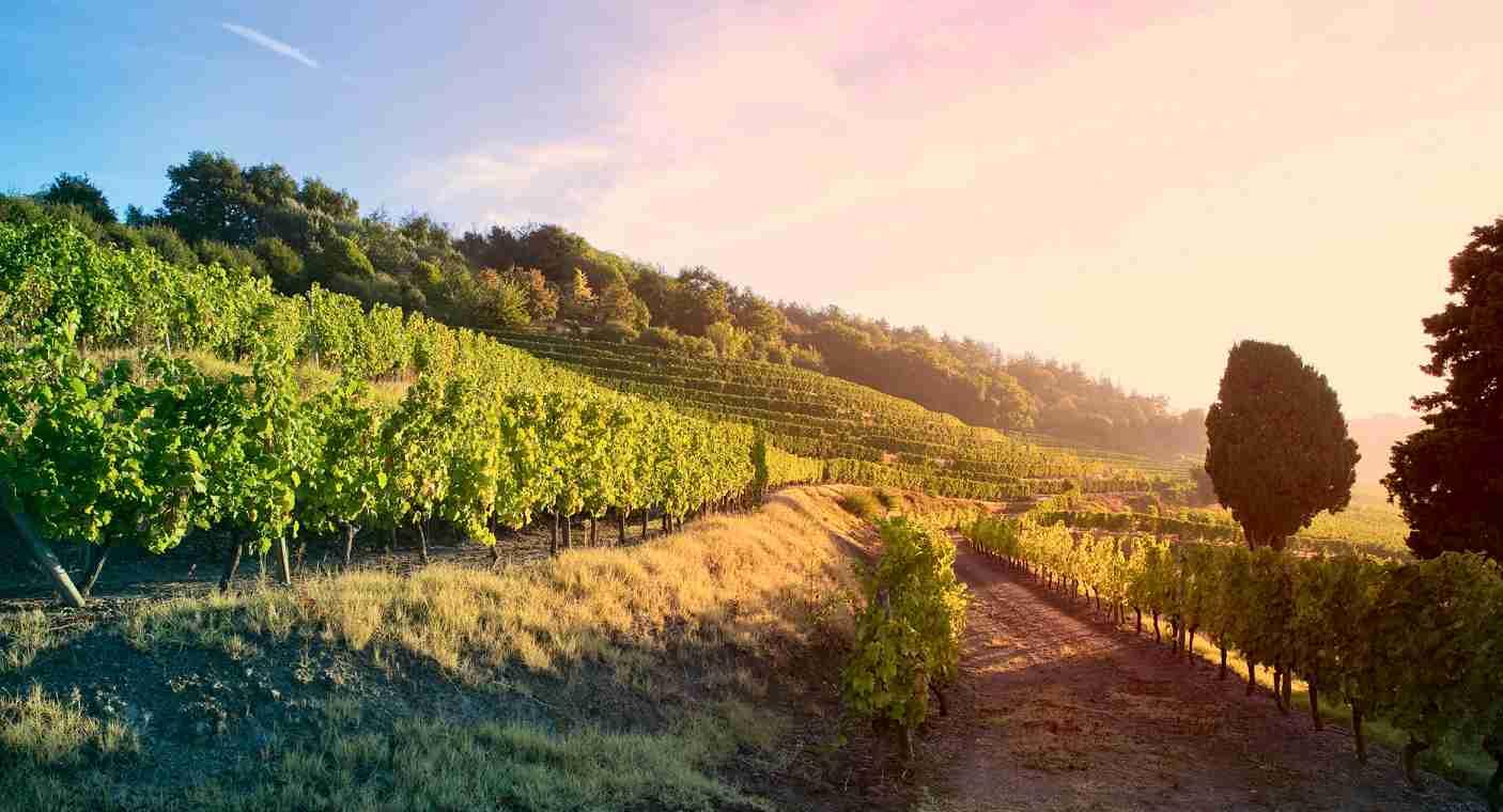 Bordeaux et les vignes