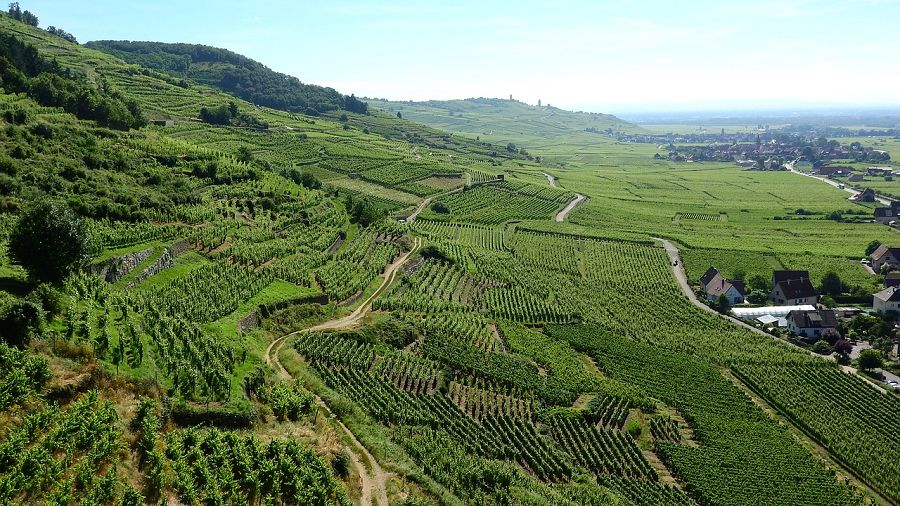See the vineyards of Alsace with a car rental from Sixt.