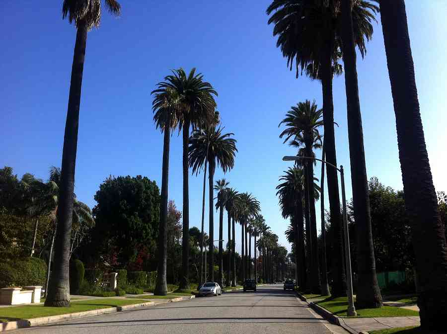 Palm trees line the streets of Beverly Hills