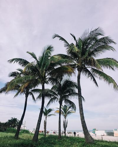 palmiers, Floride