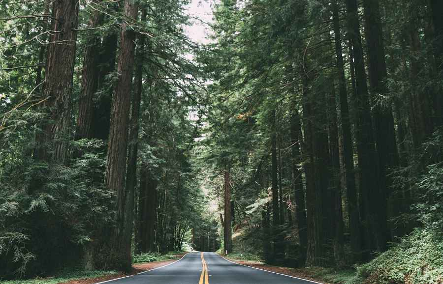 Drive to the California redwood forests with a Sixt car rental